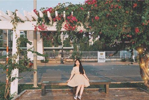 Free stock photo of asian girl, beautiful flowers, Beautiful sunset, city