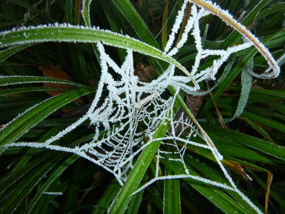 Free stock photo of frozen spider web