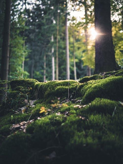 Selektives Fokusfoto Von Gras Im Wald