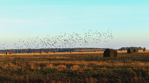 Безкоштовне стокове фото на тему «зграя птахів, надворі, поле»