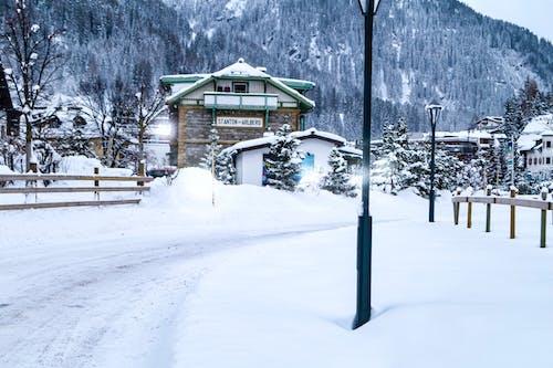 Ingyenes stockfotó Alpok, bejárat, erdő, fák erdő témában