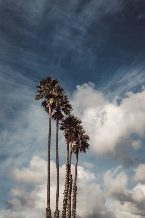 Бесплатное стоковое фото с HD-обои, деревья, идиллический, кокосовые пальмы
