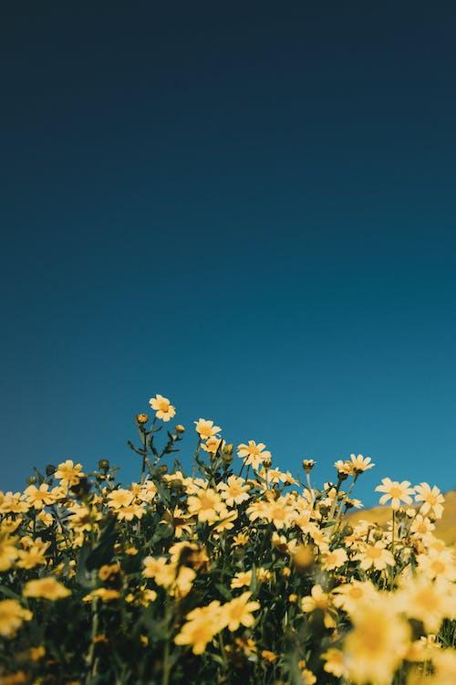 Δωρεάν στοκ φωτογραφιών με αγροτικός, ανθίζω, άνθος, γήπεδο