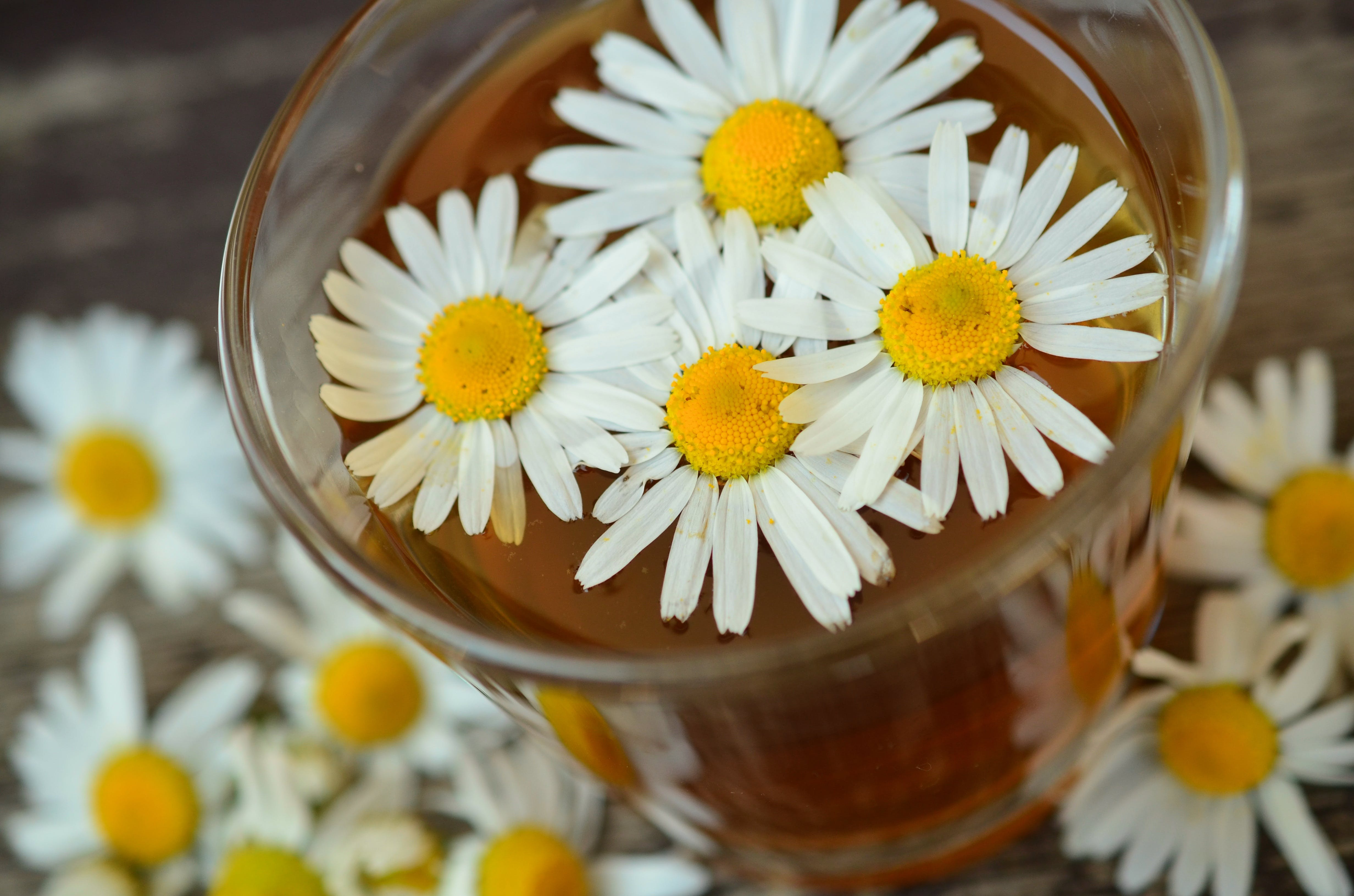 Tea with chamomile flowers
