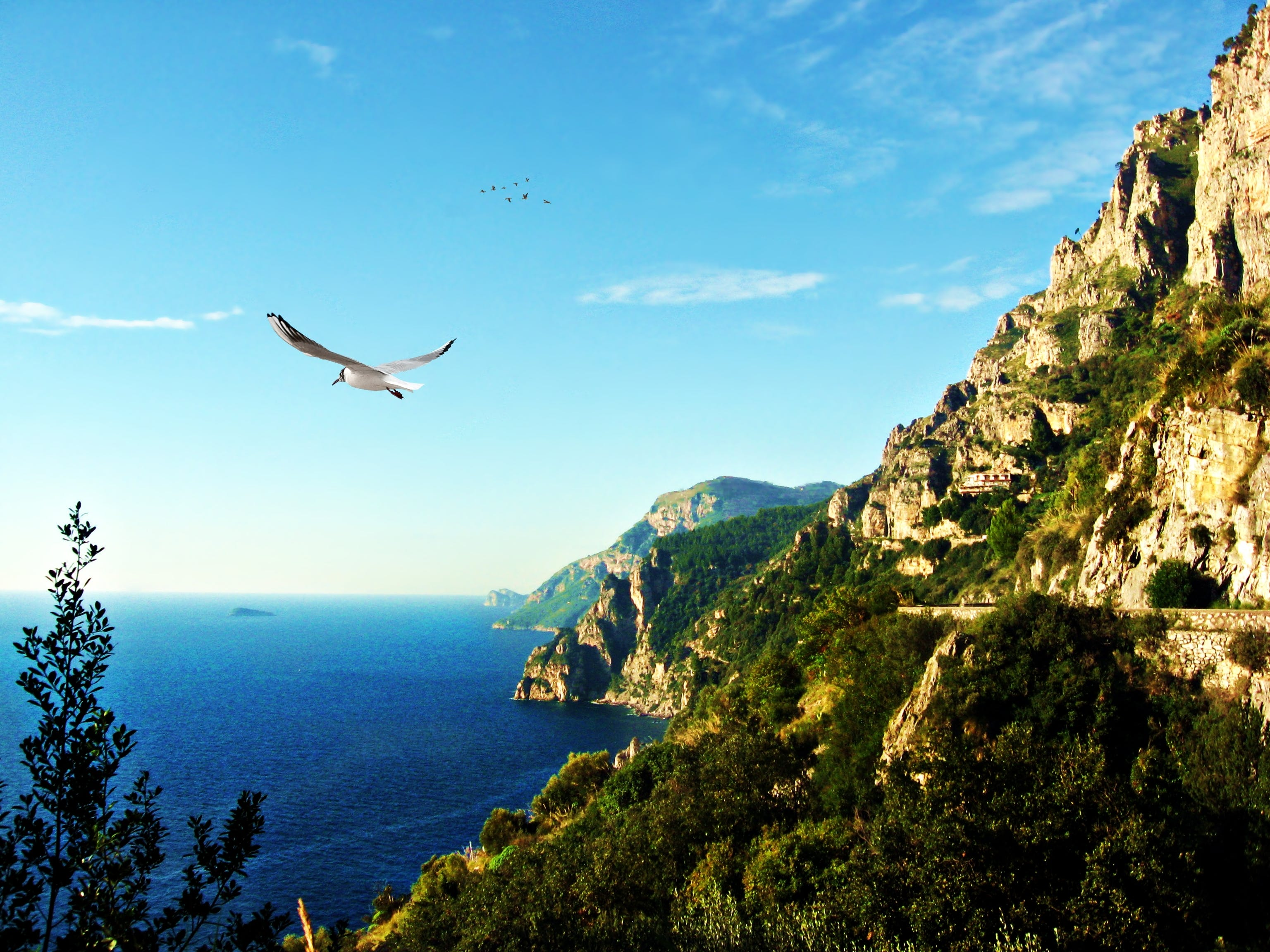 Free stock photo of amalfi, ave, beach, bird