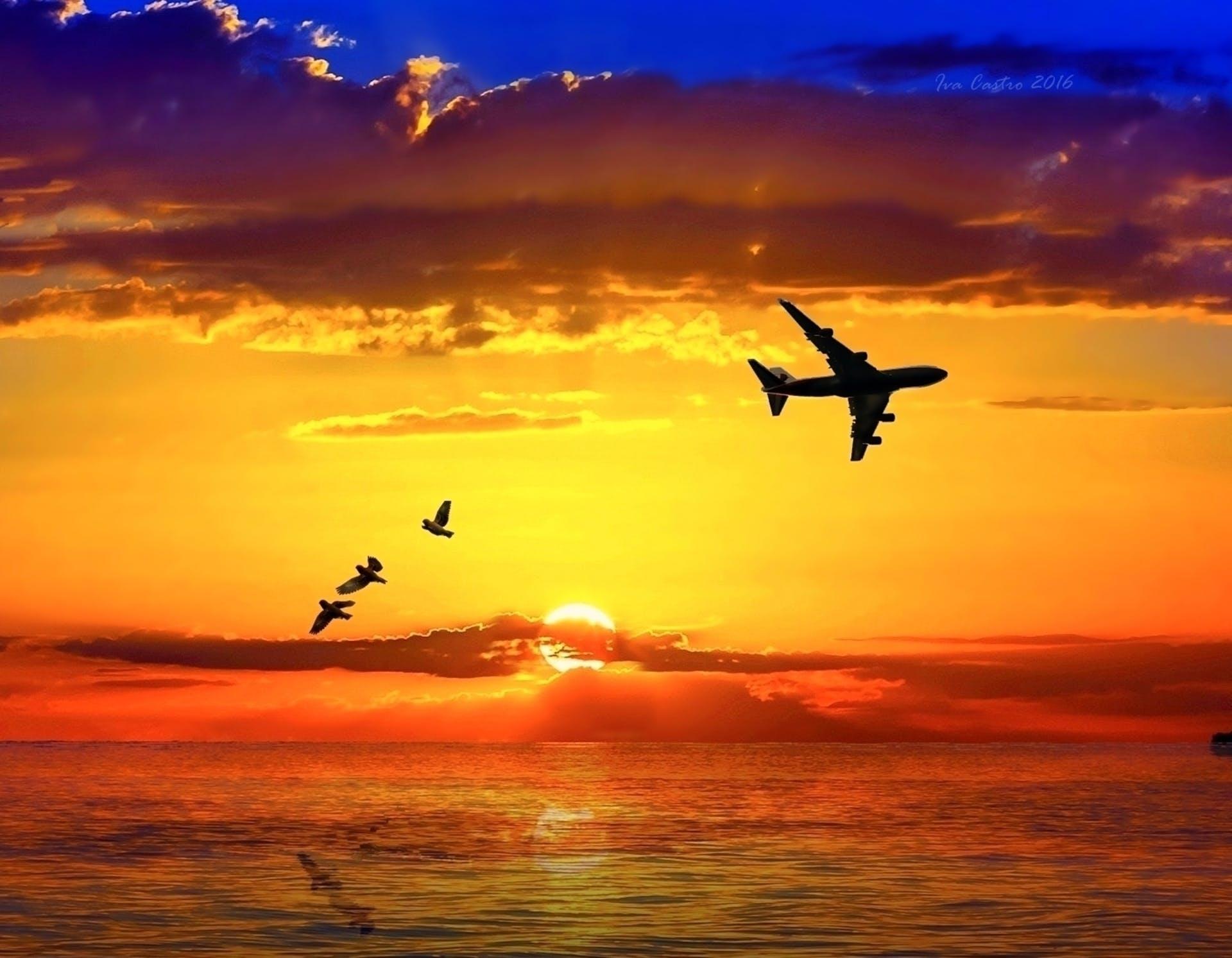 Free stock photo of aves, avian, avião, birds