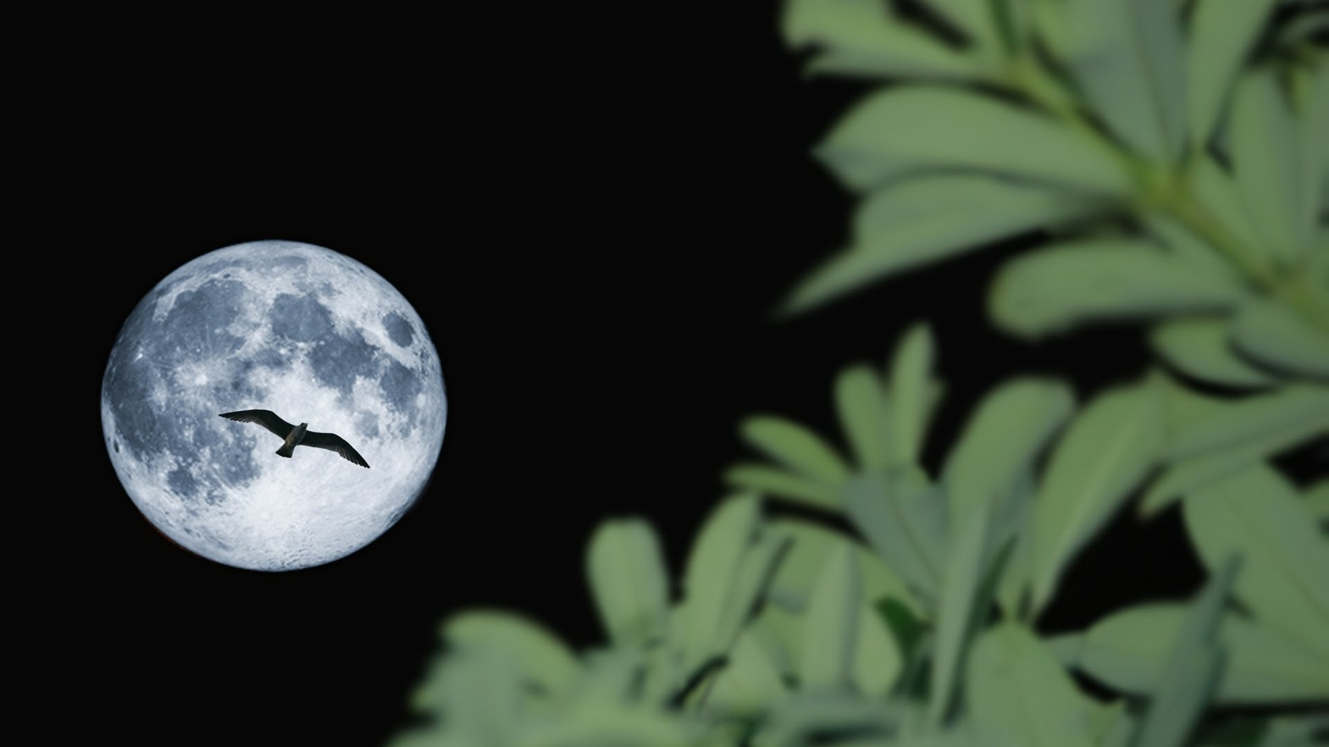 Free stock photo of ave, lua, moon, night