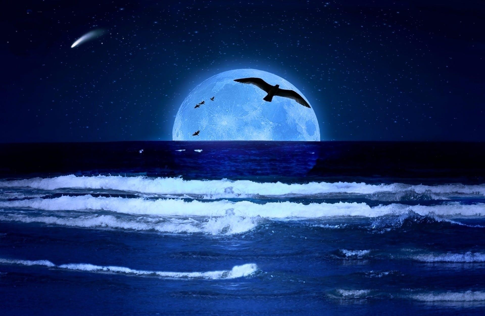 Free stock photo of lua, mar, moon, nature