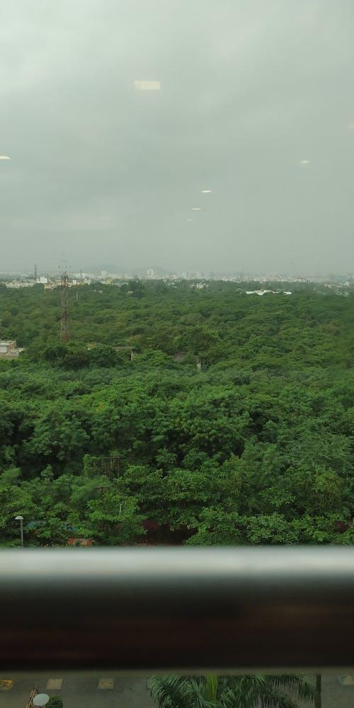 Fotos de stock gratuitas de amazonas, bosque espeso, chennai