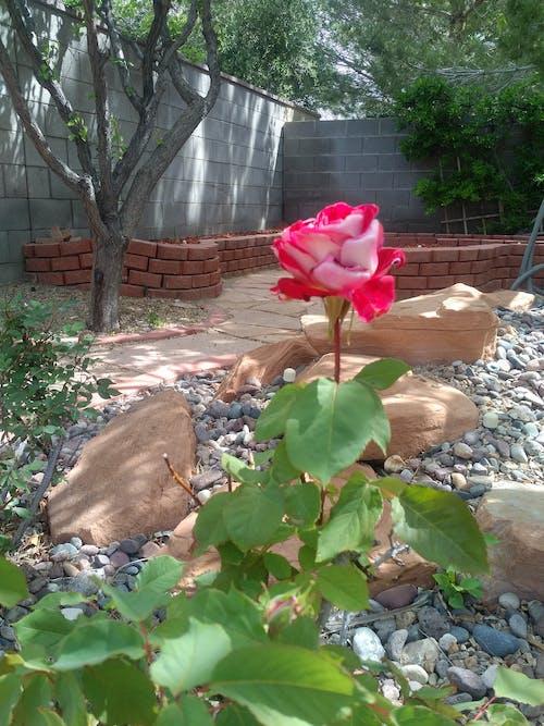 Foto profissional grátis de conhecimento, paisagem de paisagem, pedras, rosa