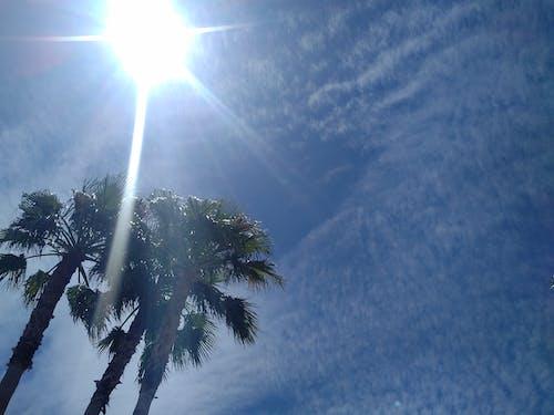 Foto profissional grátis de céu azul, conhecimento, luz do sol, palmeira