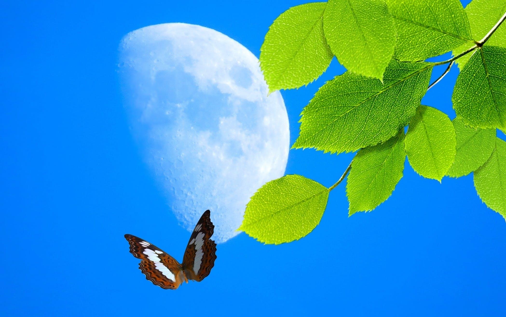 Free stock photo of borboleta, buterfly, folhas, green