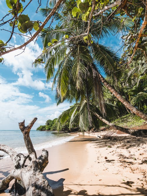 Free stock photo of beach, caribbean, caribbean sea, coconut tree