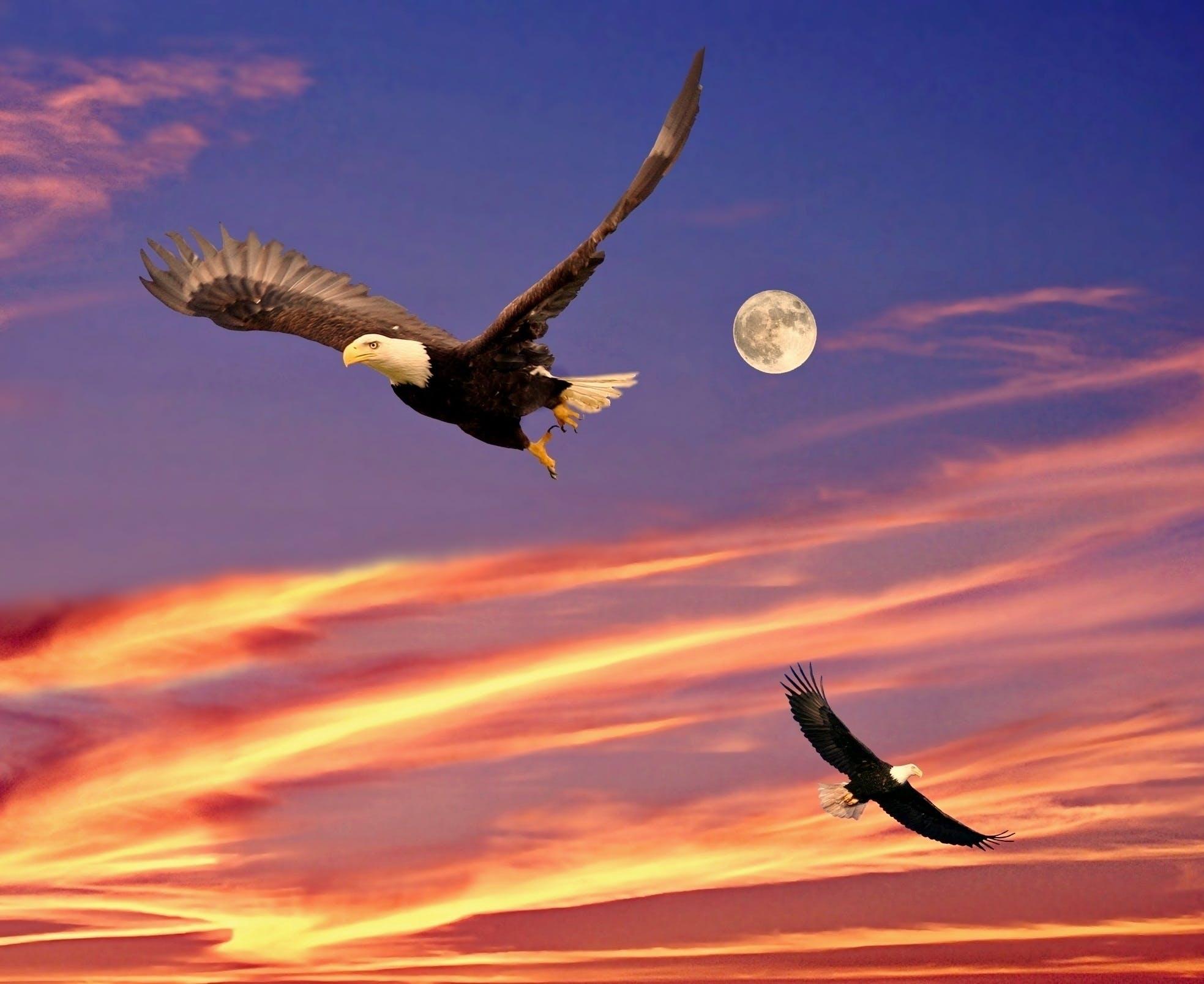 Free stock photo of ave, ave de rapina, águias, clouds