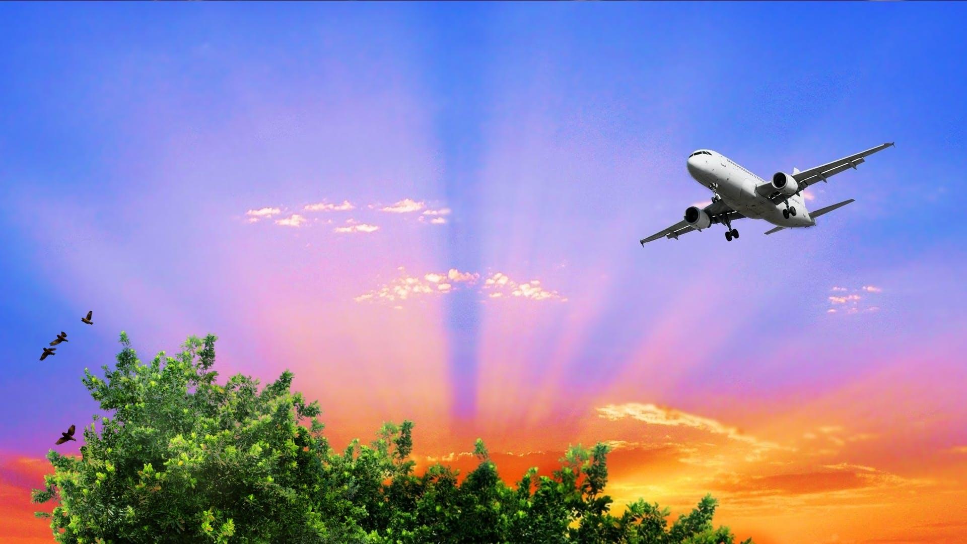 Free stock photo of avião, birds, clouds, plant