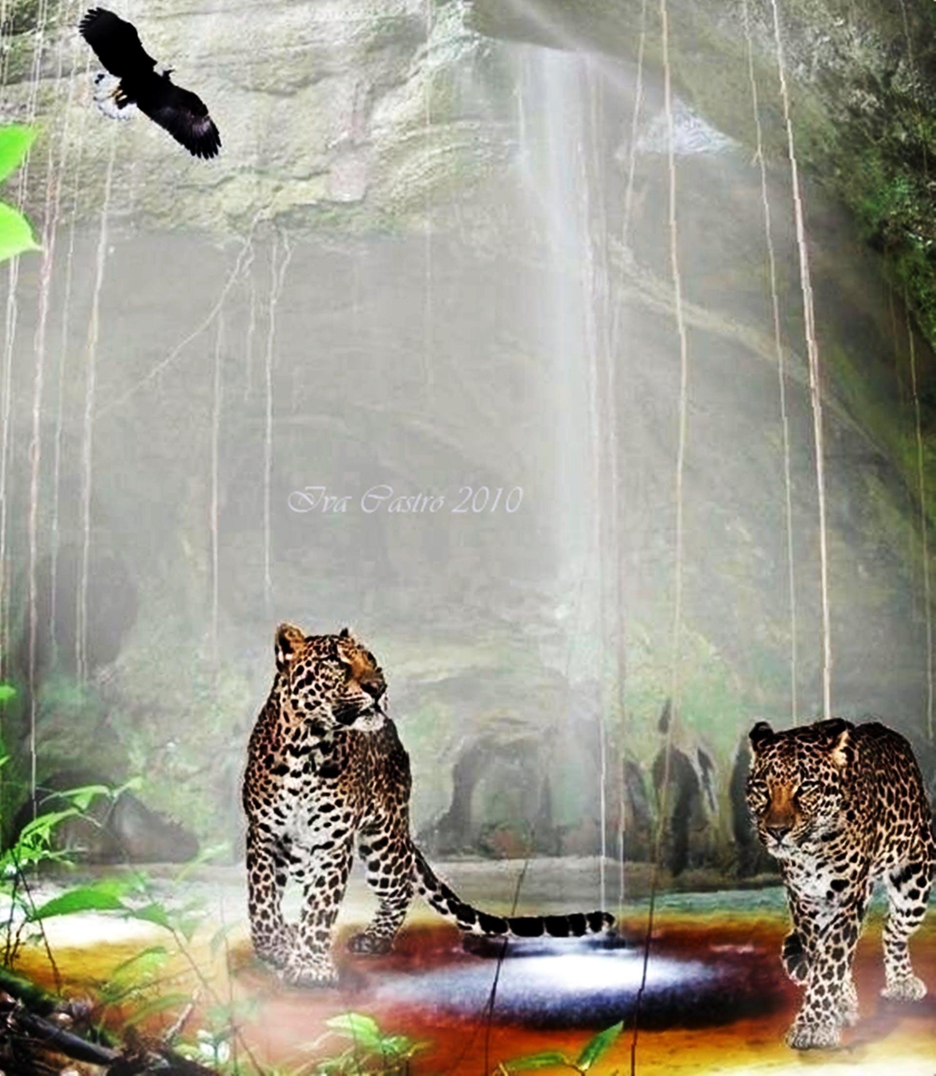 Free stock photo of animal, ave, gaviao.gruta, nature