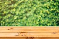 wood, light, nature