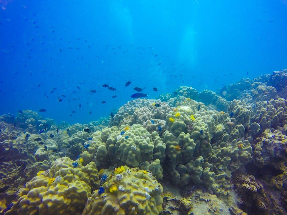 aquarium, atoll, barriere