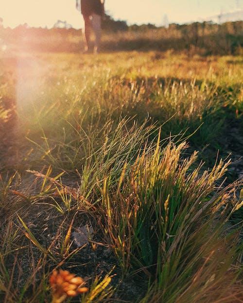Foto stok gratis berjalan, fotografi seluler, lensa suar, matahari