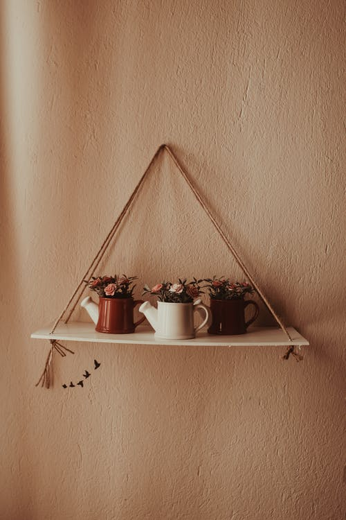Decorative Plants on Mounted Shelf on Wall