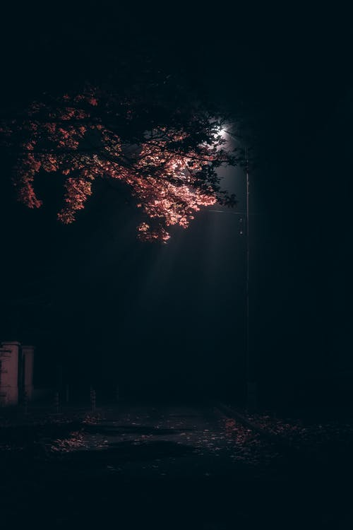 Lighted Street Lamp Post during Night Time
