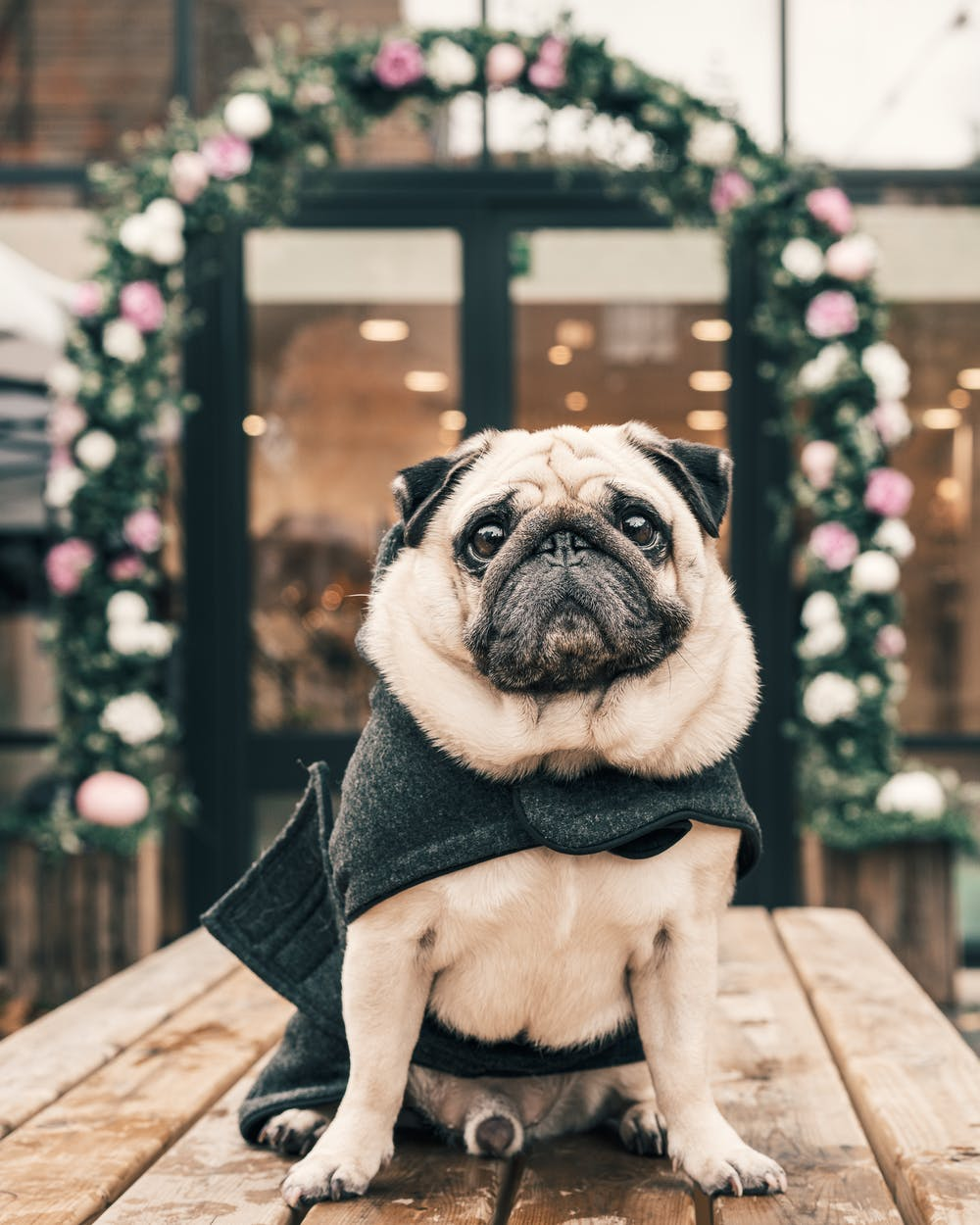 A dog sitting in a wooden table. | Photo: Pexels