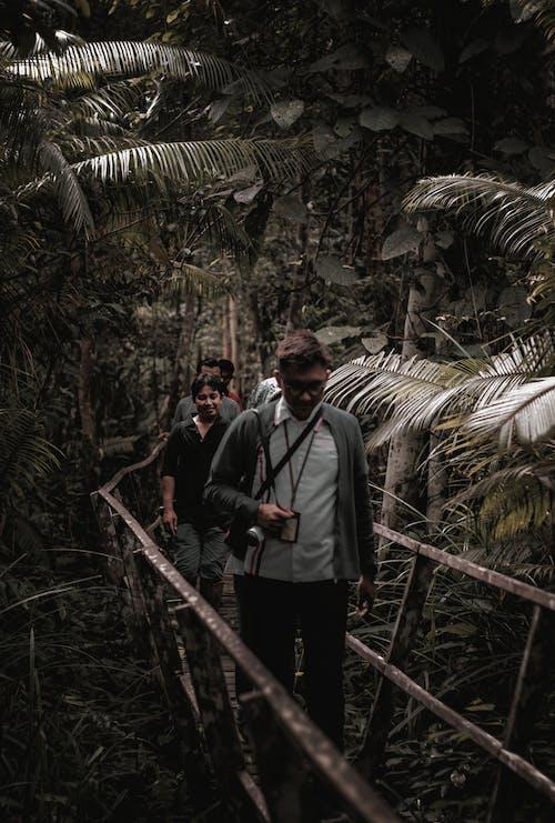 People Walking on Wooden Bridge