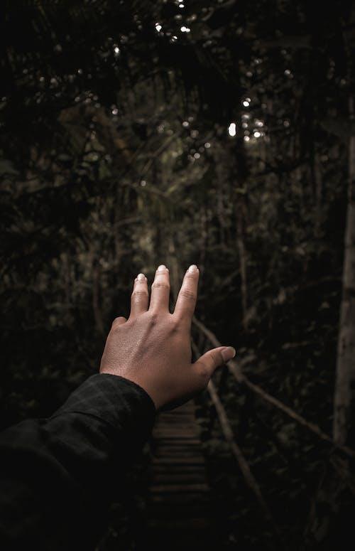Gratis lagerfoto af fingre, hånd, række ud