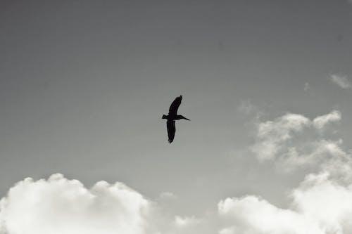 Immagine gratuita di cielo, natura, spiaggia, uccello
