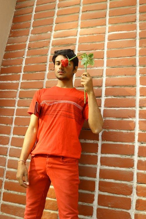 붉은 벽, 붉은 장미, 빨간, 빨간 립스틱의 무료 스톡 사진