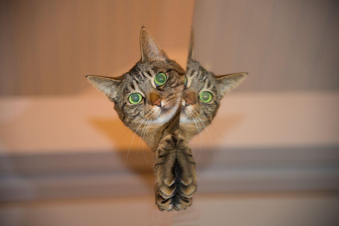 Brown Tabby Cat Peeking Beside Wall