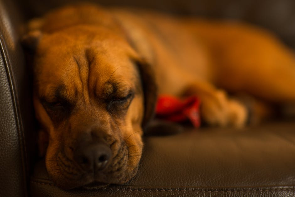 New free stock photo of relaxing, animal, dog