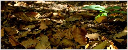 Fotos de stock gratuitas de parque red river george en mauricio