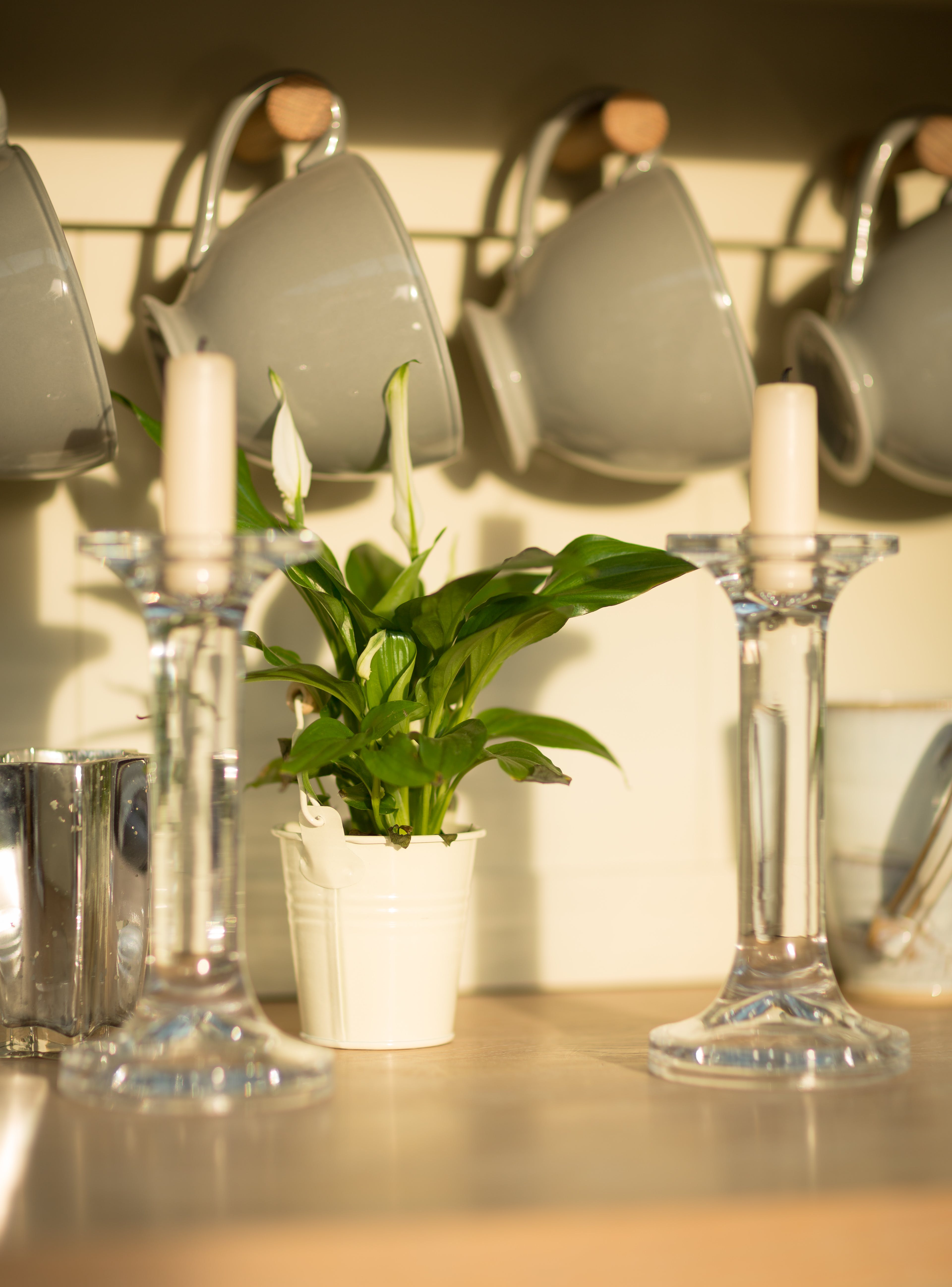 Free stock photo of glass, vintage, plants, cups