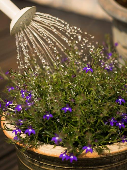 Fotos de stock gratuitas de agua, bonito, concentrarse, crecimiento