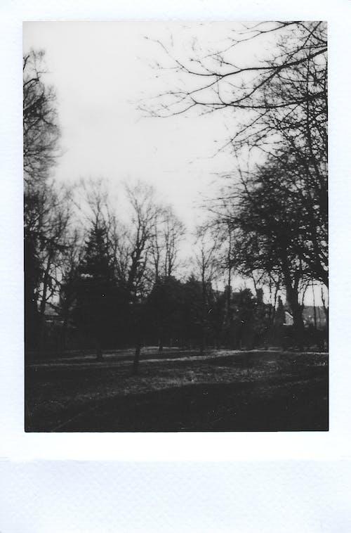 Silhouetfotografie Van Bomen