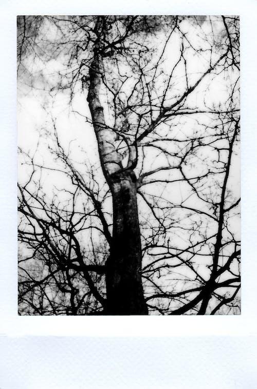 Gratis stockfoto met afbeelding, boomtakken, buiten, eenkleurig