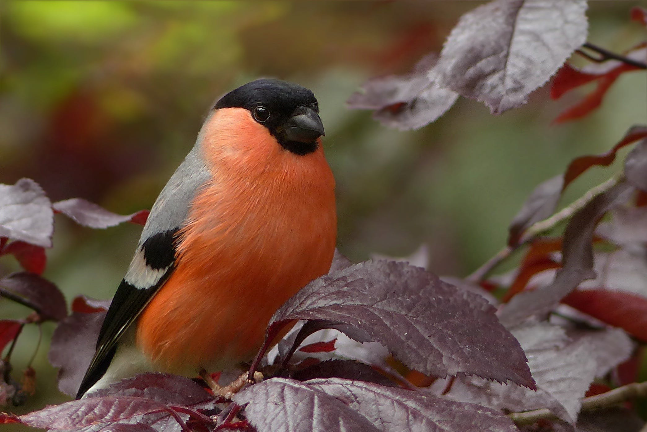 Black Gray and Orange Bird