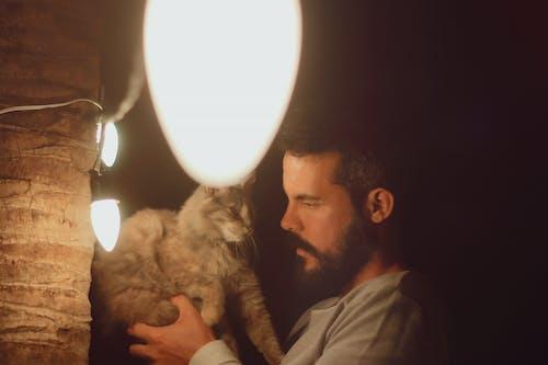 Free stock photo of bright lights, love, wild cats