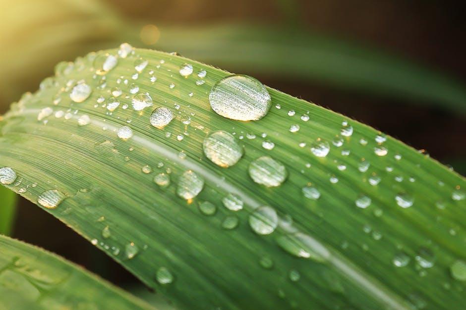 Kelembaban menyebabkan kondensasi pada daun tumbuhan