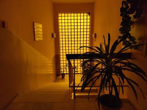 Gratis stockfoto met binnen, binnenshuis interieur, bloempotten, designen