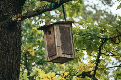 Free stock photo of autumn, autumn leaves, bird, bird house