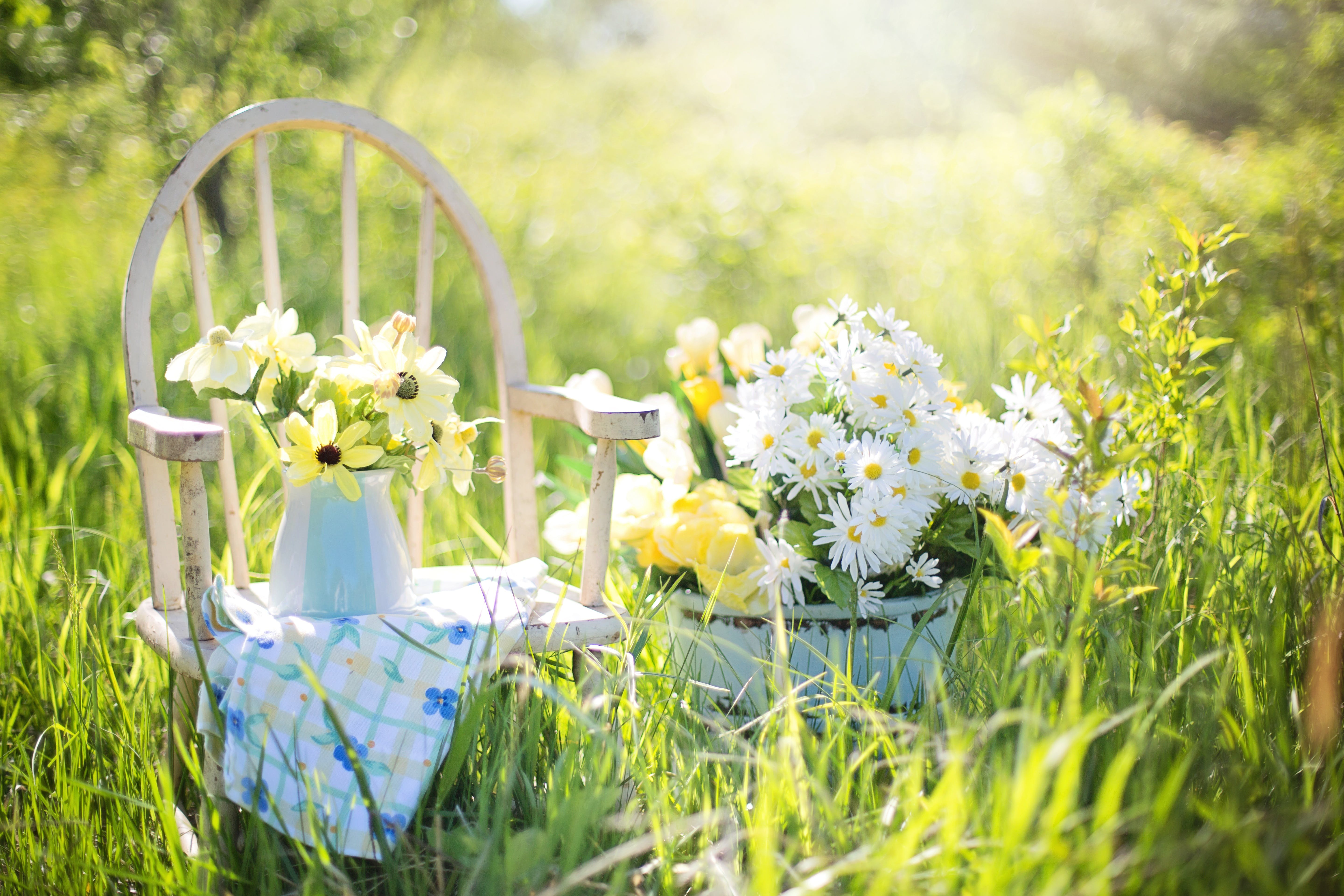White Daisies on Blue Ceramic Pot Beside White Wooden Armchair on Green Grass Field during Daytime