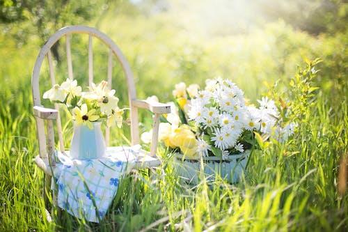 bitki örtüsü, bitkiler, Çiçek açmak, çiçek saksısı içeren Ücretsiz stok fotoğraf