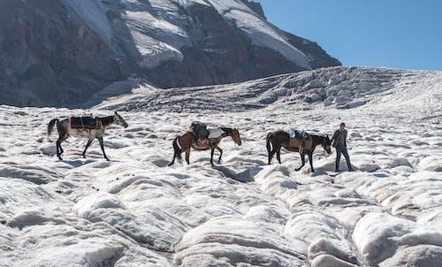 Základová fotografie zdarma na téma koně, třpytivější