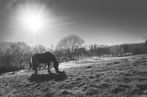 Foto d'estoc gratuïta de animal, blanc i negre, cavall, cel