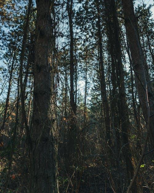 Gratis lagerfoto af bakker, clearing, efterår, fjeder