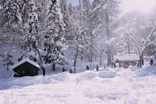 Free stock photo of snow, storm, white