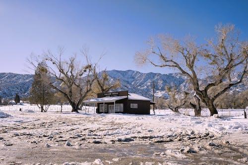 Free stock photo of freezing, house, snow