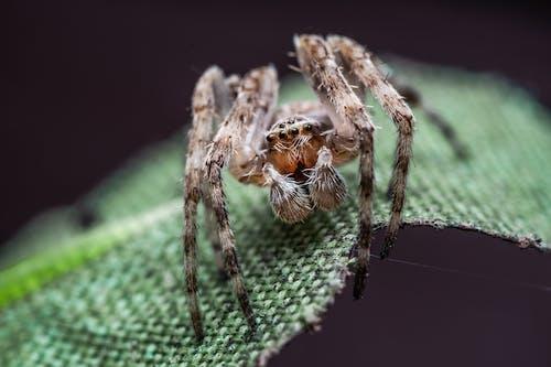 거미, 거미류, 동물, 동물 사진의 무료 스톡 사진